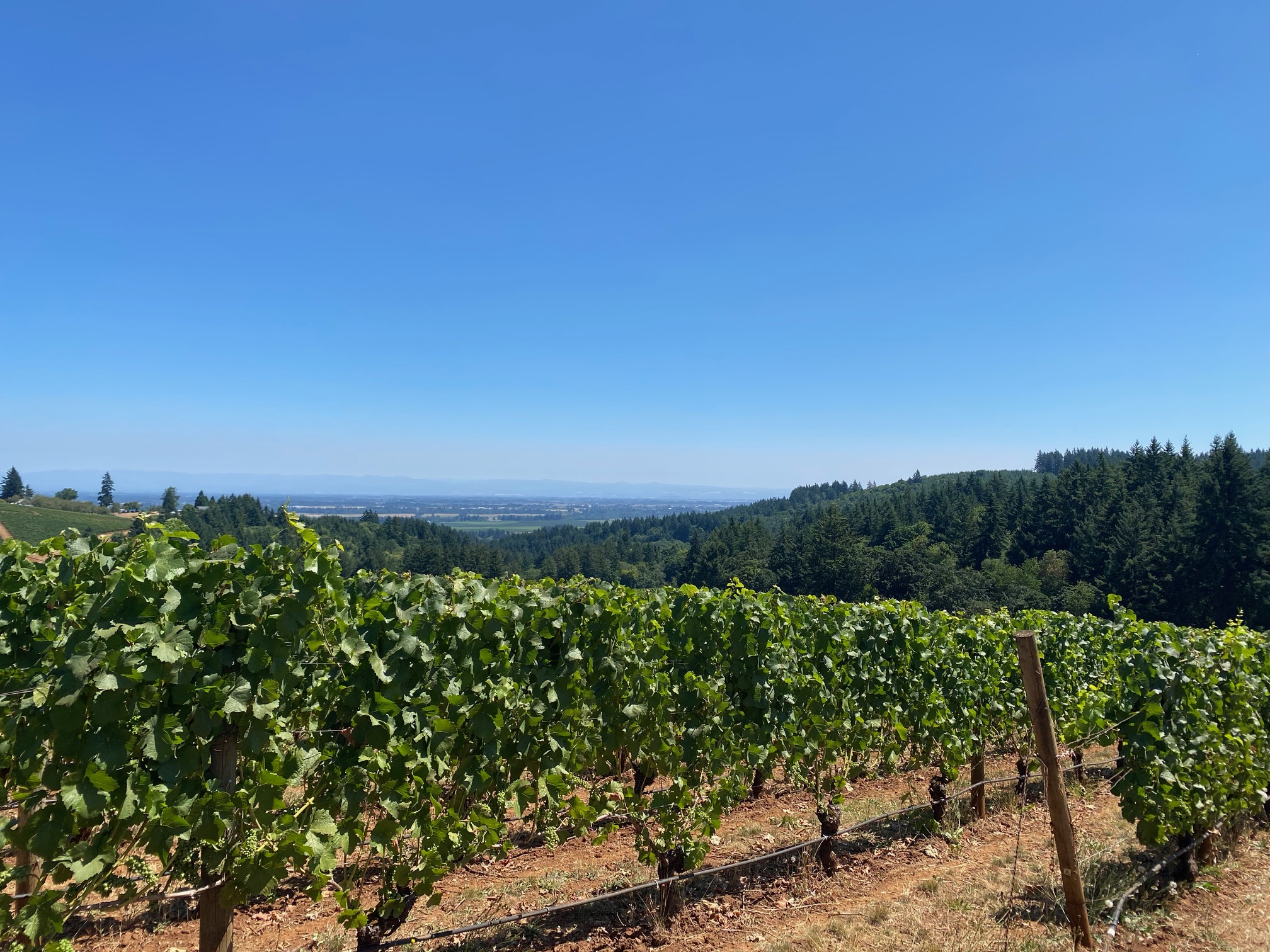 Go Take a Private Vineyard Hike in Oregon Wine Country - Knudsen Vineyards Dundee, Oregon Noteworthy Wine Journal